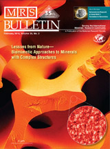 COVER MRS Bulletin: SEM image